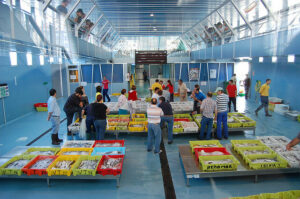 software sector pesca